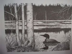 Loon Swimming Pen & Ink Print