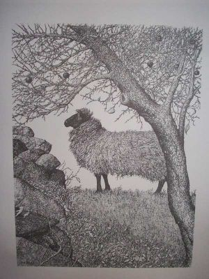 Sheep and Apple Tree Pen & Ink Print