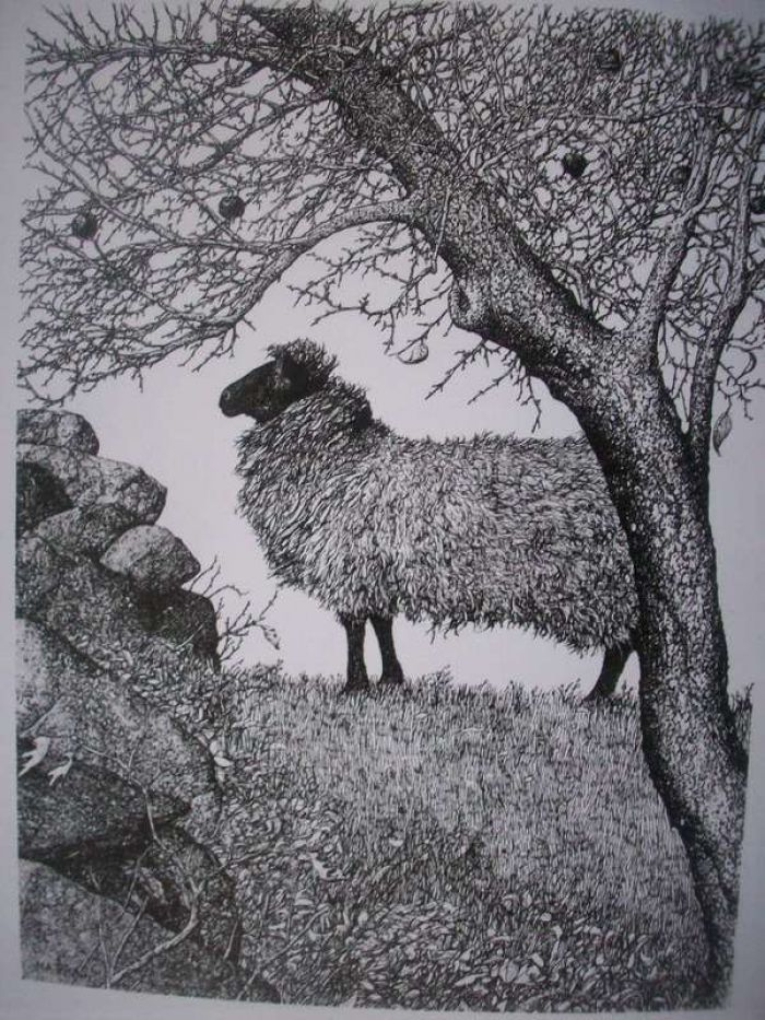 Sheep&Apple Tree Note Cards
