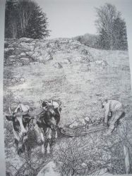 Oxen&Stoneboat Pen&Ink Print