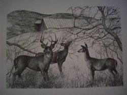 Three Deer Pen & Ink Print