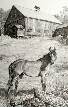 Horse and Barn Pen & Ink Print