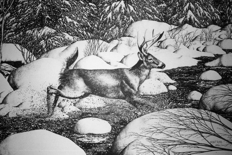 Buck Running Pen & Ink Print