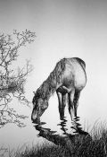 Horse Drinking Pen & Ink Print
