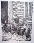 Chickens Pen & Ink Print